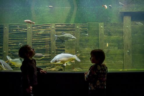 Auf Augenhöhe mit Karpfen und Co. – Kinder vor dem Riesenaquarium im Haus der Tausend Teiche (Foto: Karsten Nitsch)