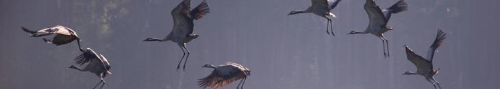 startende Vögel